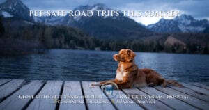 5 tips for a pet-safe road trip this summer