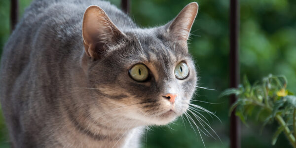 Why a cat-friendly veterinary practice is necessary